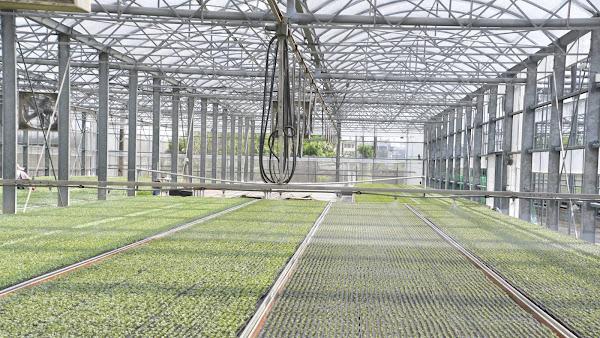 博華蔬菜育苗場加強型力霸溫室 務農不再看天吃飯
