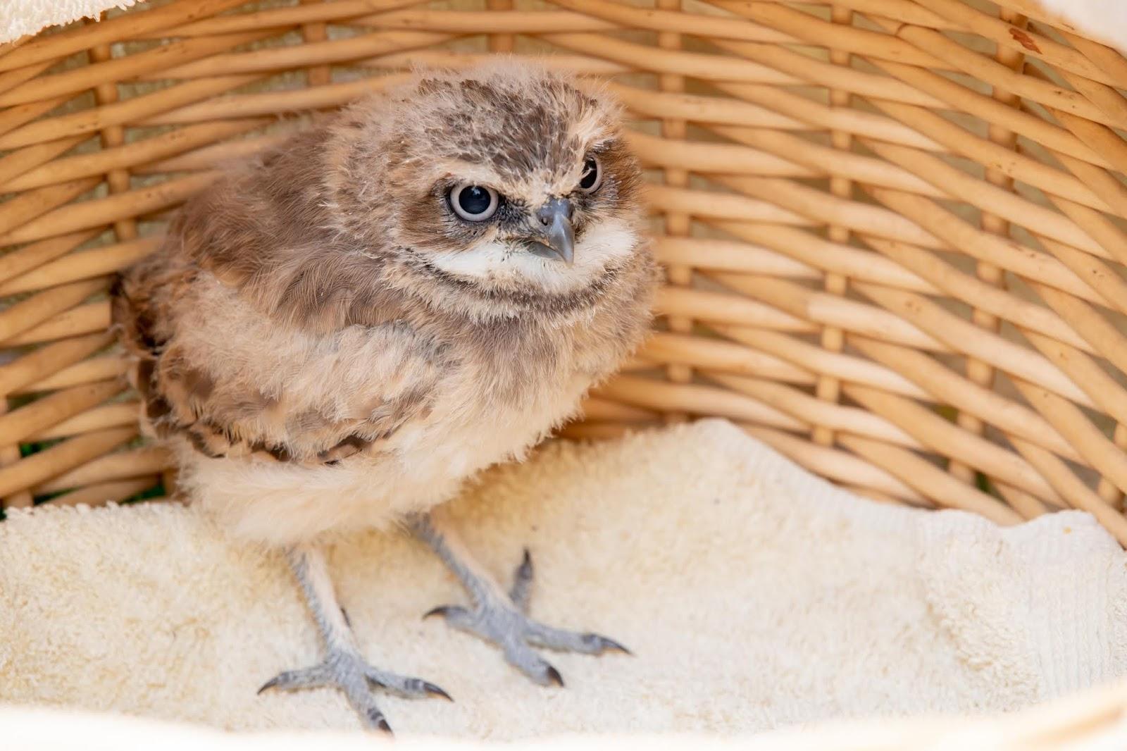 Woodland Park Zoo Blog Meet Papu The Newest Zoo