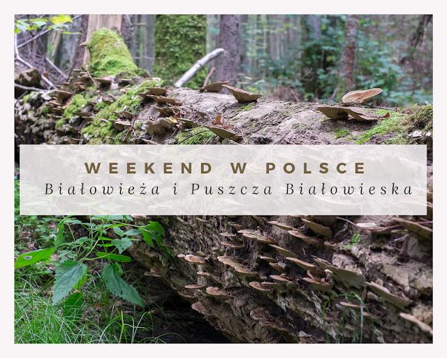 Weekend w Polsce: Białowieża i Puszcza Białowieska