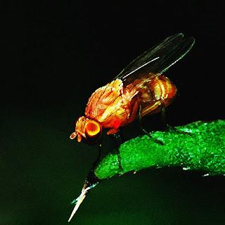 Желтый муХ