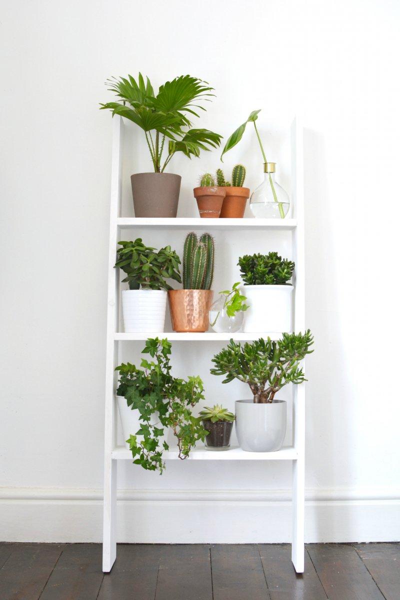 plante interieur tendance 2018