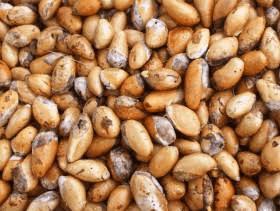Manfaat biji durian untuk kesehatan tubuh