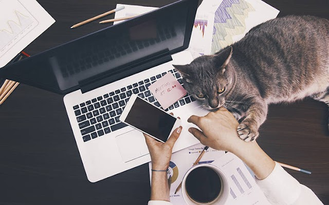 Γιατί οι γάτες αγαπούν τα πληκτρολόγια των υπολογιστών;