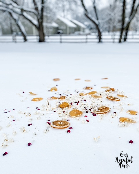 snowy yard covered in dried fruit