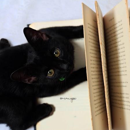 Cerita Arang: Hal-hal yang Saya Ketahui Mengenai Kucing, Setelah Mengadopsi Arang