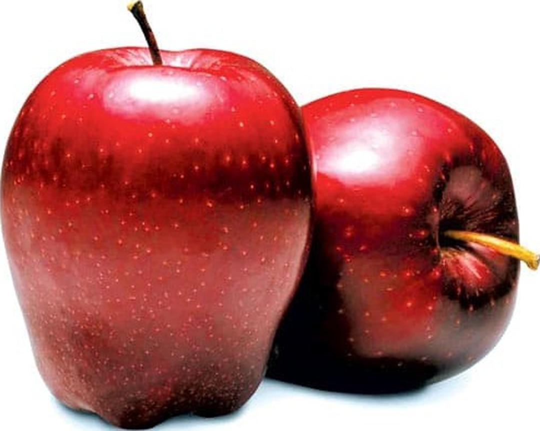 Viral! benih buah apel red dell 4 seed Kota Bekasi #bibit buah genjah