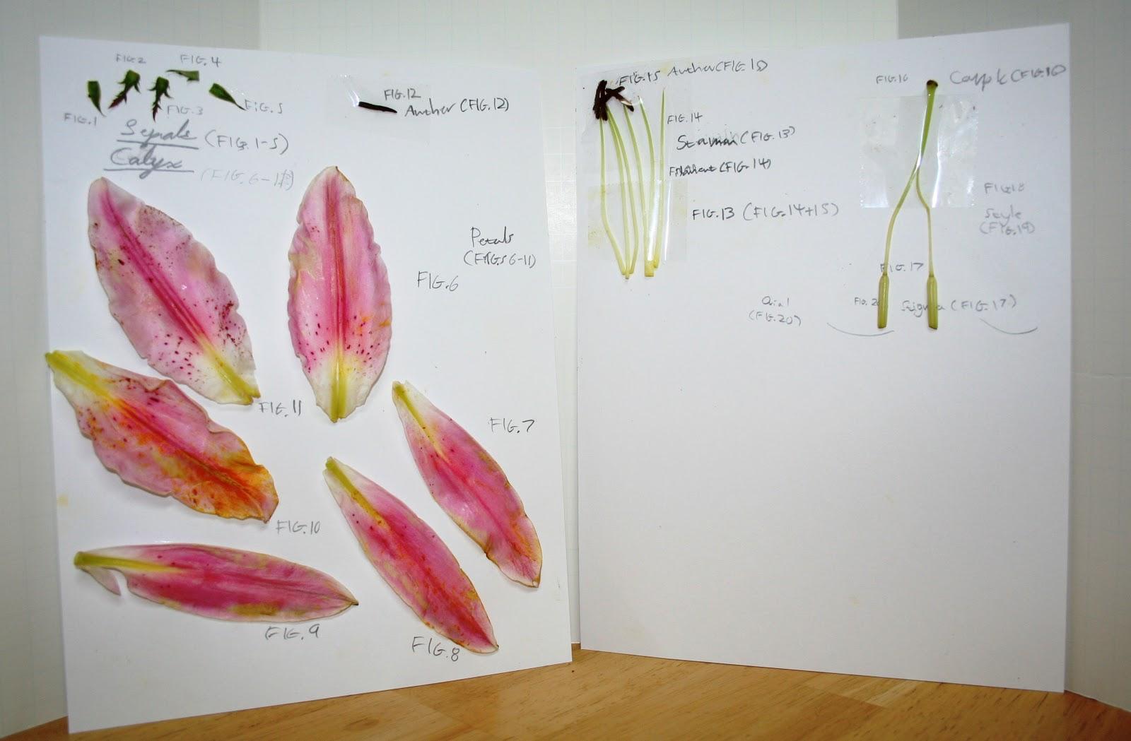 Flowers Online 2018 » flower dissection worksheet   Flowers Online
