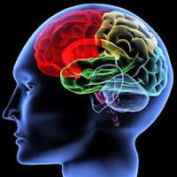 Lecithin meningkatkan fungsi otak