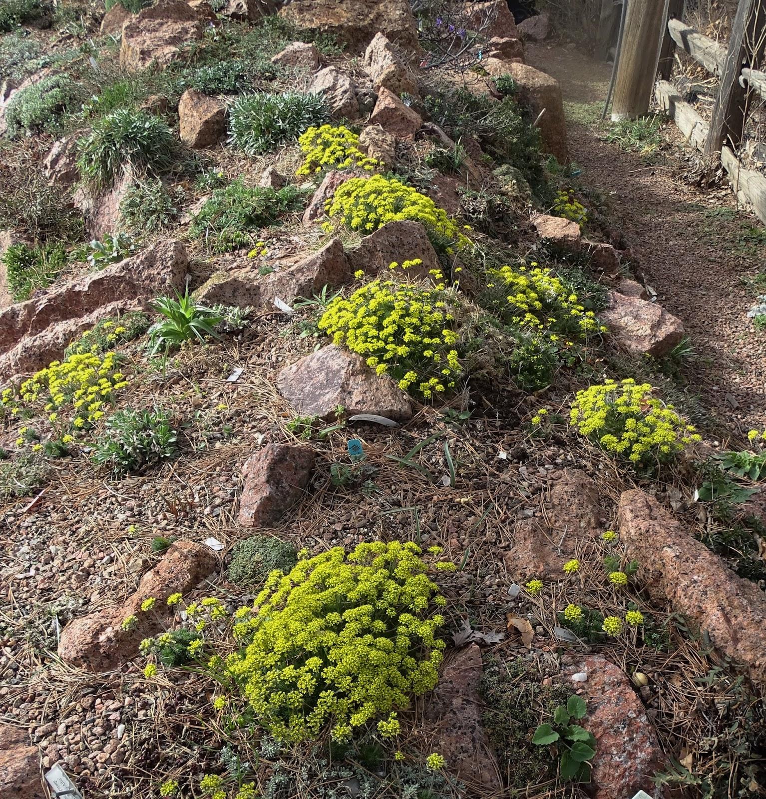 Prairiebreak: Before The Snow: Mid-March Bloom In Denver