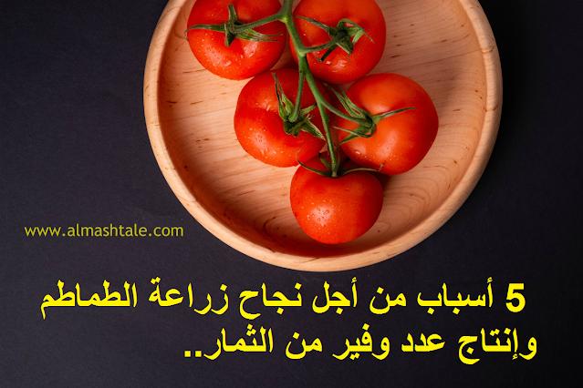 زراعة الطماطم في المنزل