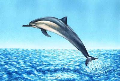 Imagen de delfín saltando sobre el mar