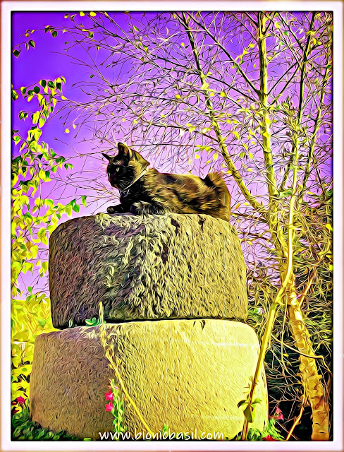 Purrching with Parsley ©BionicBasil® Caturday ArtHop