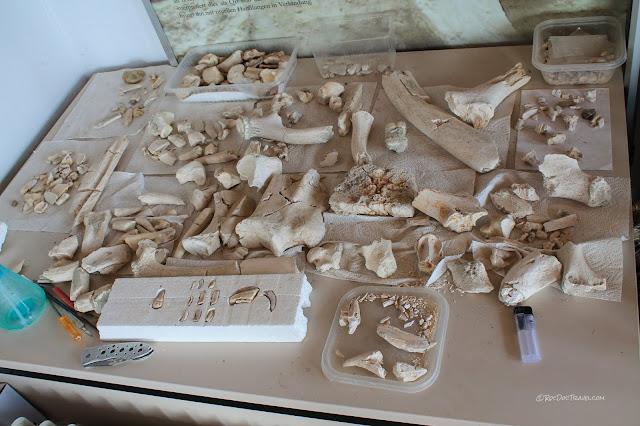 Germany fossil sites museums Tubingen, Urwelt Museum Hauff Holzmaden, Solnhofen archaeopteryx lithography, Bilzingsleben homo erectus copyright RocDocTravel.com