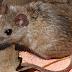 Πώς θα απαλλαγείτε από τα ποντίκια στο σπίτι