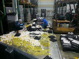 Palet huevos de rompe en empresa
