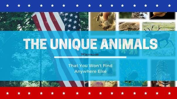 The Unique Animals