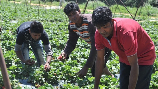 Μέτρα προστασίας και τεστ στους εργάτες γης ζητάει το Μέτωπο Ταξικής Ανατροπής