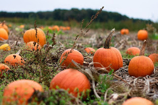 North African Pumpkins
