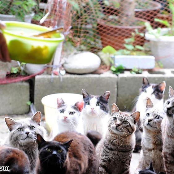 Tashirojimo dan Aoshima, Surganya Pecinta Kucing