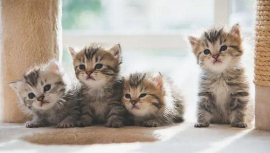 Kutamaan dan Manfaat Memelihara Kucing