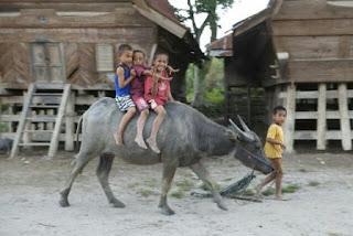 anak anak yang sedang menunggang kerbau