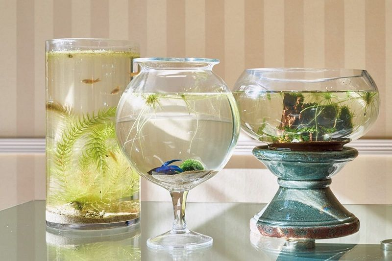 What Kind of Plant Goes in a Betta Fish Vase?