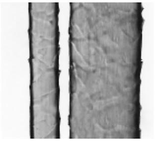 Longitudinal-View-500X-Mohair-fibre