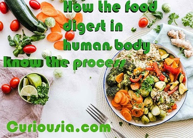 How the food digest in human body
