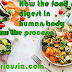 How the food digest in human body know the process