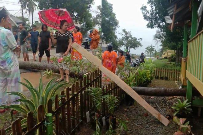 Hujan Deras, Pohon Tumbang Timpa Posyandu di Bone