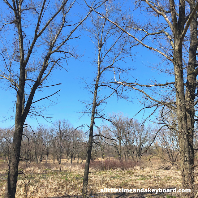 Trees cutting a contrast against blue skies at Heron Creek Forest Preserve