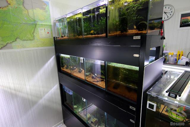 my aquarium room