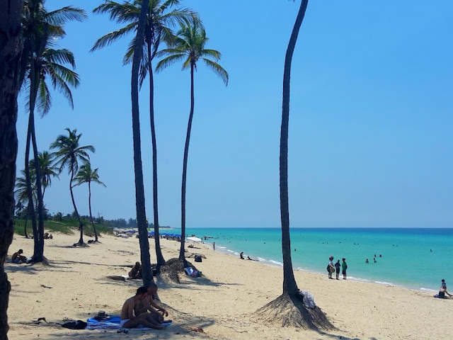 Palm tree lined beach in Havana, Cuba