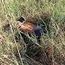 Carro cai em barranco na vicinal que liga Santa Rita a Tambaú