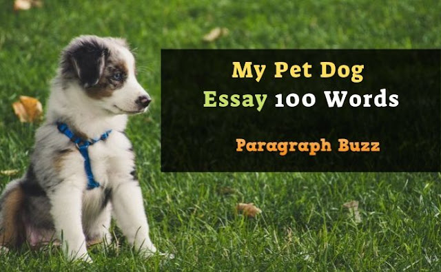 My Pet Dog Essay 100 Words