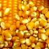 Conab abre inscrições para compra de sementes de agricultores familiares do Ceará