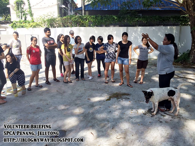 Volunteer Briefing, SPCA Penang, Jelutong