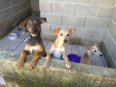 GPA convida para feira de adoção de cães e gatos no domingo 24/06