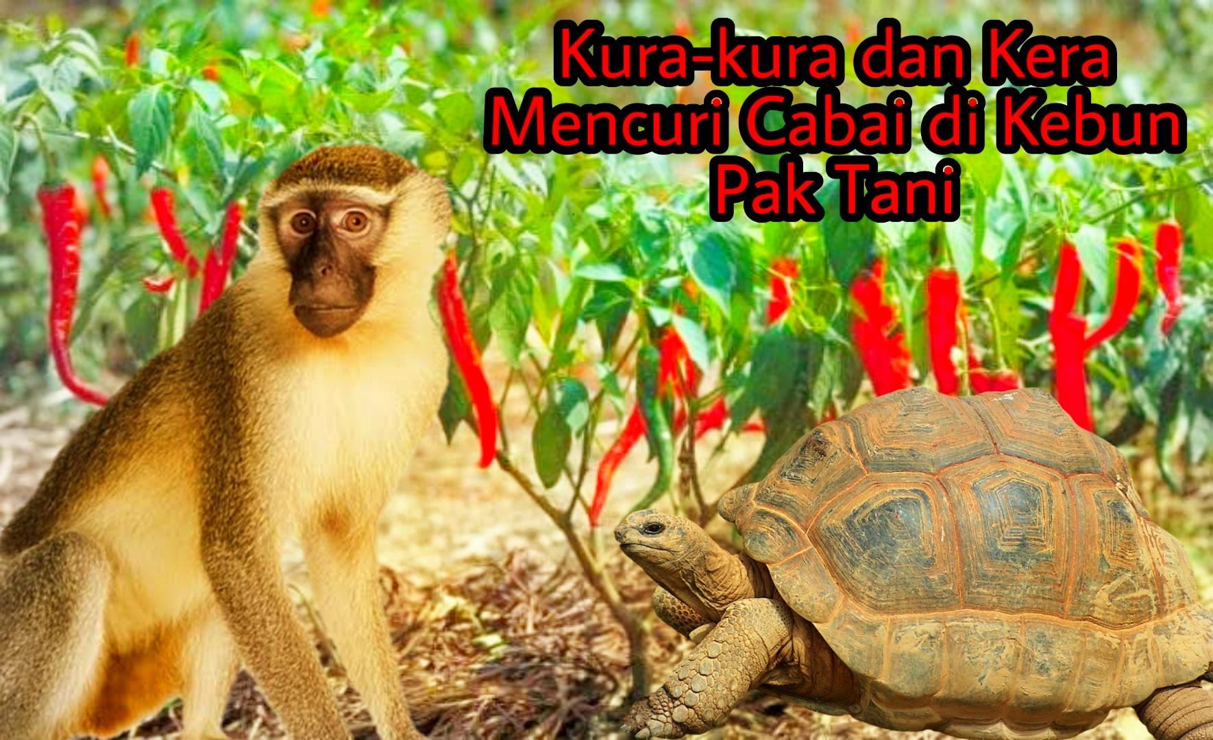 Kura-kura dan Kera Mencuri Cabai di Kebun Pak Tani