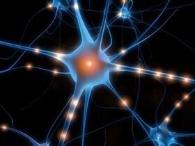 sinir hücresi nöron