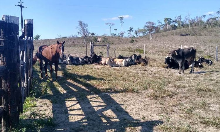 Itapetinga: Polícia Civil recupera gado avaliado em mais de R$100 mil