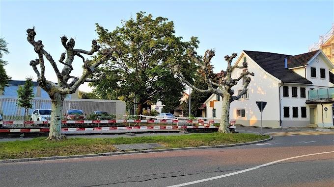 Symbolic Trees