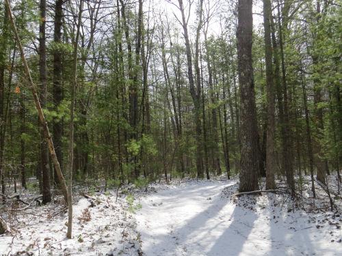 Cedar Creek Road in snow