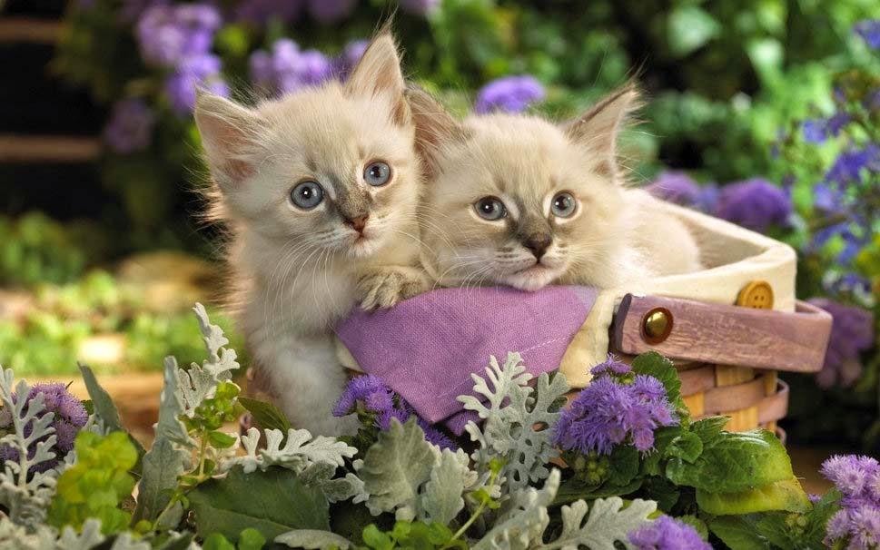 cats-in-the-garden