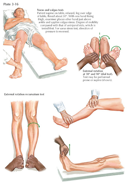 PHYSICAL EXAMINATION OF THE LEG AND KNEE