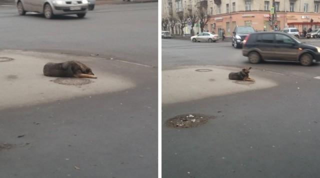 Собаку выкинули из машины на оживленном перекрестке