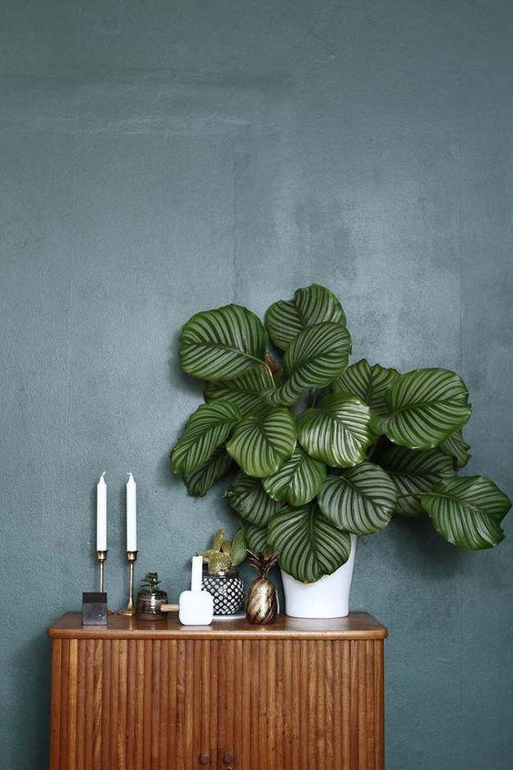 Trồng thực vật trong nhà là cách lý tưởng để cải thiện độ ẩm cho da