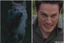 How Well Do You Know Werewolves From The Vampire Diaries