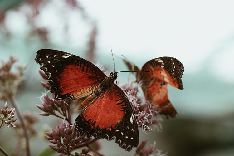 tropisch-vlinder-festival-utrecht