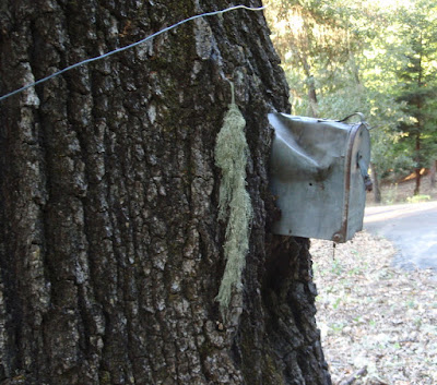 Forgotten Mailbox in Oak Tree, ©B. Radisavljevic